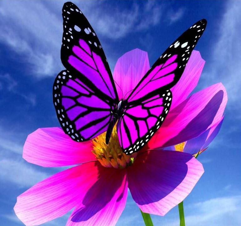 Voir un papillon en hiver genevieve monastre - Images de papillon ...